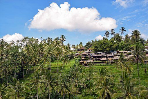 Luxury Health Retreats and Affordable Medical Checkups in Ubud